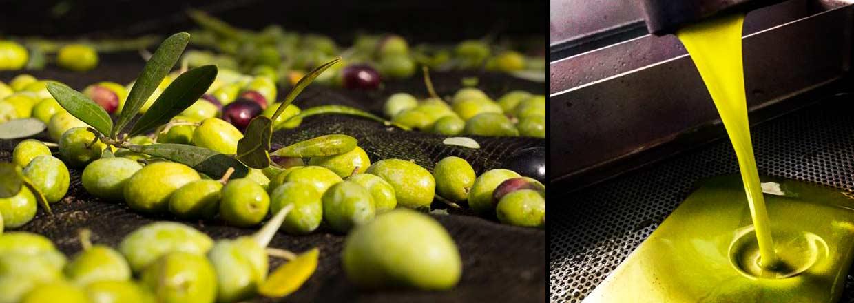 Økologisk olivenolie fra Le Tre Colonne