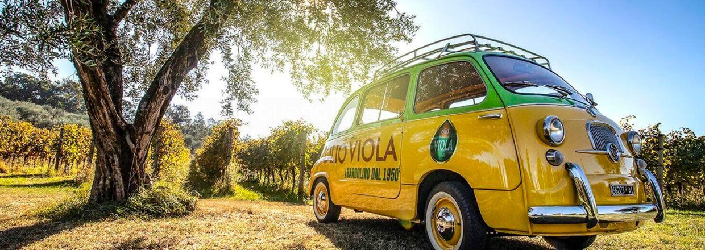 Økologisk olivenolie fra Olio Viola